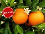 Portakalı Koklarsanız...