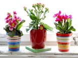 Evin Havasını Temizleyen 13 Çiçek