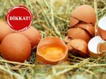 Yumurtayı Buzdolabına Koymak Yanlış mı?