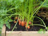 Saksıda Yetiştirebileceğiniz 12 Kışlık Sebze