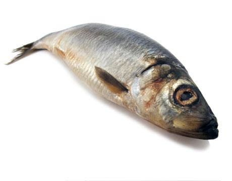 """RİNGA BALIĞI  Bu küçük ringa balığının 85 gramında 3.6 mikrogram bulunur.  <a href=  http://foto.mahmure.com/saglik/bagisiklik-guclendiren-besinler_40216 style=""""color:red; font:bold 11pt arial; text-decoration:none;""""  target=""""_blank""""> Bağışıklık Güçlendiren Besinler"""