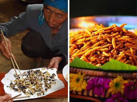 Arı larvası ve bambu kurdu