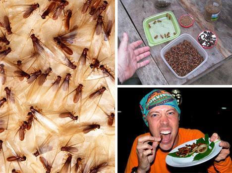 Beyaz karınca ve termit