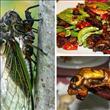 Yenilebilen böcekler! - 4