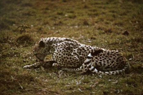 Vahşi hayvanlar çok saygılı  Vahşi hayvanlar sınırlara karşı çok saygılı. Etrafı tülle bile çevrili olsa, sınırı belli olan mekânların içine girmiyorlar. Ortada tehlike arz eden bir olay olmadıkça insanlara asla saldırmıyorlar...
