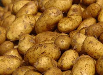 Büyük miktarda patatesiniz var ise torbanın içerisine bir adet elma koyun. 8 hafta boyunca filizlenmesini ve büzüşmesini önler.