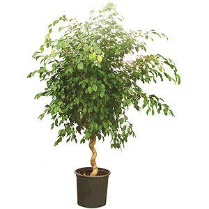 Bitkilere kucak açın  Yeşil bitkiler sadece evinizi güzelleştirmekle kalmıyor. Karbondioksit alıp oksijen üreten bitkiler, evin havasını da temizliyor. Çiçek yetiştirmek size göre değilse, fazla bakım gerektirmeyen bir bitki tercih edebilirsiniz.