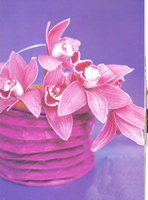 Kağıt fener lamba:   Kağıttan fener lambanızın içine saksıda menekşe ya da fesleğen, biberiye gibi bitkileri yerleştirin ve sıradan bir saksıya espri katın!