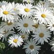 Her derde deva bitki çayları - 4
