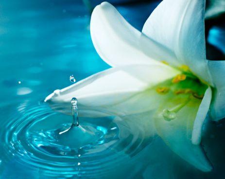 Balık:   Kiraz çiçeği, zambak, limon çiçeği