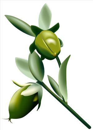 Nemlendirici bitki: Jojoba 200 yıla yakın bir süre önce Kaliforniya'da bir çölde keşfedilen bu çalıdan elde edilen balmumuna benzer yağ, bugün saç bakım ürünlerinden ruja, kremlerden şampuanlara hemen her türlü kozmetik üründe kullanılıyor. Yaygın ismiyle jojoba, Latince ismiyle Sitnmondsia Chinensisten elde edilen yağ, son derece saf olması ve çok kolay emilmesi nedeniyle kozmetik üreticilerinin gözdesi. Harika bir nemlendirici olan jojoba, sabun ya da tonik gibi ürünlerde iritasyonu azaltmak için ürünlerin içeriğine ekleniyor.