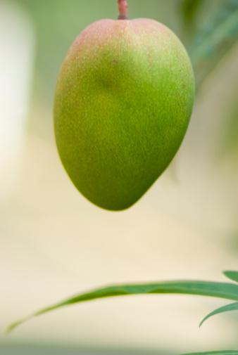 19. Mango Mango içten güzelleştiriyor. Kateşol oksidaz, lakkaz ve magneferin gibi enzimler bağırsakları arındırarak cildi düzleştiriyor. Mangodaki B vitaminleri saç oluşumunu da destekliyor.  Öneri: Yalnızca yumuşak olan mangolardan satın alın; çünkü bu meyve sonradan olgunlaşmaz.  20. Darı İçerdiği yüksek oranda silisyumdan dolayı darı tam bir güzellik tahılıdır. Silisyum bağ dokusunu güçlendiriyor; cilt, saç ve tırnak oluşumunu destekliyor.  Öneri: Meyve ve yoğurtla beraber tüketilen darı taneleri, etkili bir güzellik iksiri.   21. Somon Deniz balıkları Omega-3 yağ asitleri açısından çok zengin. Omega-3 yağ asitleri, güneş yanıklarına karşı etkili ve cildi onarıyor.  Öneri:  Keten tohumu yağı ve kanola yağı da aynı etkileri gösteriyor.