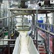 Dünyanın en ünlü cips markası Lays fabrikasından f - 8