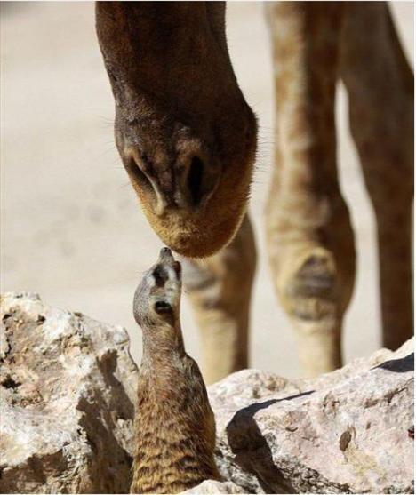 Hayvanlar aleminin en şirin canlıları - 2