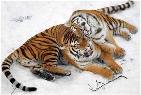 Hayvanlar aleminin en şirin canlıları - 11