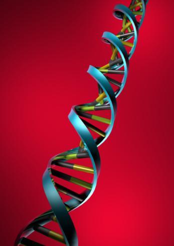 2. GENETİK MİRAS  Gen araştırmaları şimdilerde şişmanlıkla ilgili araştırmaların en önemli ayağını oluşturuyor. Çünkü açlığın sorumlusunun bazı genler olduğu düşünülüyor. Tek yumurta ikizleriyle yapılan araştırmalar gösteriyor ki vücut ağırlığının yüzde 70'ine kadar olan kısmını genlerimize sadece yüzde 30'luk bir bölümünü ise çevre faktörlerine borçluyuz. Bilimadamları şişmanlığa yol açan gen sayısının 30-100 arasında olduğunu söylüyor. Hepsinin tek başına çok küçük bir etkileri var. Ancak bir araya geldiklerinde tartının ibresini fırlatıveriyorlar. Buna göre iştahı artıran genler, vücuda elma veya armut formunu veren genler, metabolizmayı yöneten genler belirlenmiş durumda. Yuvarlak genlere sahip olanların maalesef yediklerine çok dikkat etmesi gerekiyor. Her şeyden önce özellikle yaşamın belli dönemlerinde özellikle dikkat etmeniz gerekiyor. Örneğin hamilelik döneminde veya menopoza girerken. Doktorlar gelecekte bu gen durumunu dengeleyecek ilaçların çıkacağını söylüyor. Ama o zamana dek yapılacak şey beslenme alışkanlıklarına dikkat etmek.