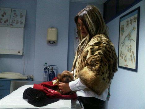 Seren Serengil gittiği her restoranda köpekleri için porselen tabaklarda servis yaptırıyor.