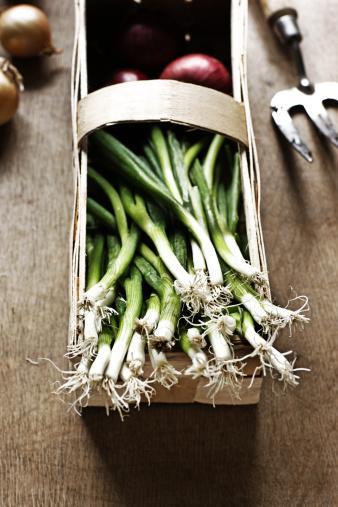 Soğan çeşitleri, pırasa ve sarımsak:  Kolesterolü düşürür, tümör oluşumunu engeller, kanser yapıcı maddeleri zararsız hale getirir, helikobakter pyloriyi baskılar. Salatalara çiğ formda ince ince doğrayarak eklemek etkindir. Pişirildiğinde aktif bileşenler kaybolmaktadır. 1 adet soğan, 2 diş sarımsak ve ½ adet pırasa yeterlidir.