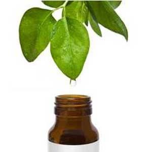 Herbalist Tarkan Güveloğlu'nun çay ağacı yağı tarifi  Bir fincana bir çarba kaşığı adaçayı, 10 damla çay ağacı yağı ve  ve iki çorba kaşığı gül suyu. Bu karışımla akşamları yüzünüzü silin. İki hafta sonra tüm cilt sorunları hayatın kaybolacaktır. Yağlı ciltlerin bu suyu pamuğa çok az miktarda damlatarak kullanması gerekir.