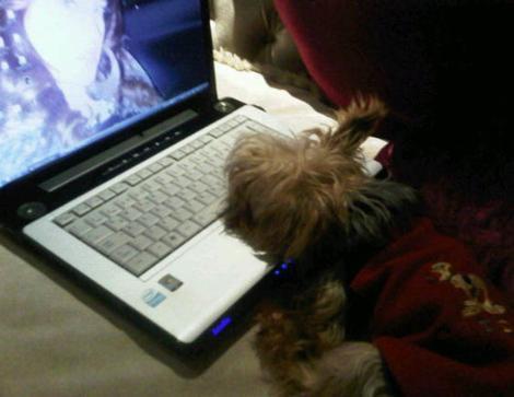 Köpeği ve bilgisayar ekranında kendi fotoğrafı.
