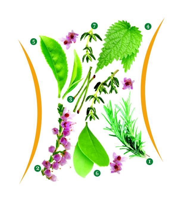 Yeditepe Üniversitesi Eczacılık Fakültesi Farmakognozi ve Fitoterapi Anabilim Dalı Başkanı Prof. Dr. Erdem Yeşilada, mevsim değişimlerinin insan vucüduna olan etkisinin son derece önemli olduğunu, bu etkileri hafifletmek ve vücuttan su atılımını hızlandırmak için 7 farklı bitkiden yararlanılabileceğini belirtiyor.    Biberiye, funda yaprağı, kiraz sapı, ısırgan yaprağı, yeşil çay, maté yaprağı ve kekik gibi bitkiler içlerinde barındırdıkları özelliklerle vücutta tam bir detoks etkisi yapıyor.  İşte Prof.Dr. Erdem Yeşilada'nın önerdiği 7 farklı bitkinin kullanım amaçları…