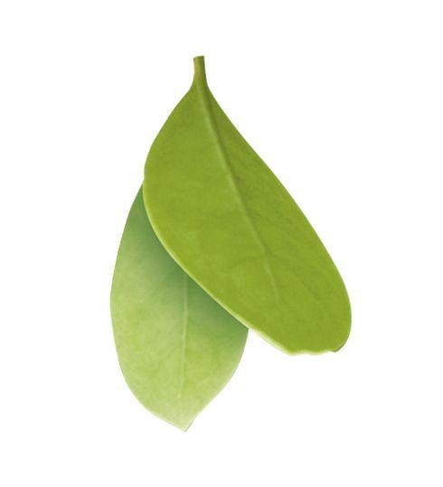 6) MATE  Yeşil çay ve Mate, içinde bulunan kafein maddesi nedeniyle fiziksel halsizliği giderici ve enerji verici (analeptik) bir içecek olarak bilinmektedir. Kafein türevleri idrar artırıcı etkisi ile yine vücutta ödemin sökülmesine yardımcı olur.