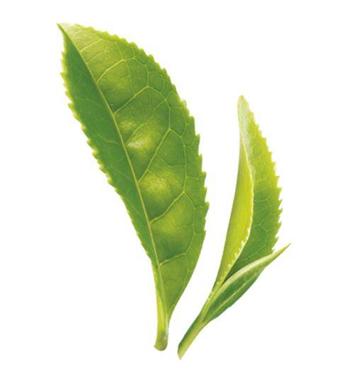7) YEŞİL ÇAY  Yeşil çay ve mate bitkileri yağ yakıcı (lipolitik) ve glikojenolitik özelliktedir. Yağ yakıcı etkisi klinik çalışmalar ile de ortaya konulmuştur.