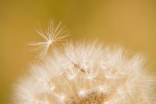 Polen:   Son yıllarda afrodizyak olarak kullanılan polenin yapısında, belli ölçüde testosteron ve diğer cinsiyet hormonları bulunuyor. Ayrıca içerisinde birçok vitamin mineral ve amino asit bulunur.
