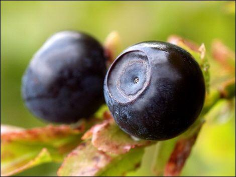 Yabanmersini ve üzüm:   Her ikisi de antioksidan deposu olan bu meyveler birlikte yenildiğinde bu özellikleri daha da güçleniyor.
