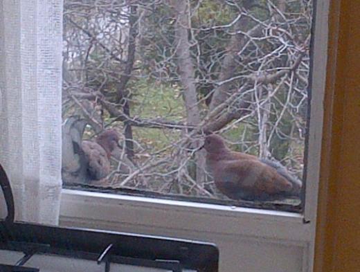 Burası Özlem Yıldız Serter'in evinin pencerelerinden biri. Soğuk havada ekmek kırıntılarınhı yiyen kuşları görüntülemiş Serter.
