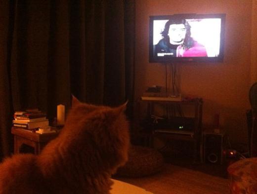 """Yine Türkmen'den bir fotoğraf. """"Aslan dizi izliyor."""""""