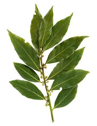• 100 gr defneyaprağına bir miktar su ilave edin ve kaynatın. Ateşten inince biraz demlensin. Soğuyunca bu su ile yüz ve boynunuz silin. Ardından nemlendirici sürün.(Bitkisel yağlardan yapılmış bakım yağı olursa daha doğrusu olur) Düzenli kullanımda 1 ay sonra yumuşak ve daha hoş görünümlü bir deriye sahip olduğunuzu göreceksiniz.  Bitkisel zayıflama, bitkisel cilt bakımı ve doğal bronzlukla ilgili her türlü sorunuzu bekliyorum.  Doğadan kopmayın, doğaya inanın.