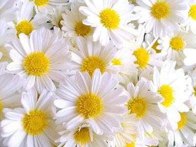 Çiçek özleri zengin vitaminler ve cildin korunması için aktif bileşenler içerir. Vücut ve saç sağlığını korumak için çiçeklerdeki doğal özleri kullanmak çok önemlidir. İşte yaşlanmayı önleyen çiçek özleri!  Papatya   Çiçekler içinde cildi iyileştirici özellikleri bulunan en yaygın bitkidir. Çiçekleri vitamin E, Provitamin A, C vitamini içerir. Papatya antiseptik etkiye de sahiptir. Cildi yatıştırır, tahriş ve kızarıklıklara iyi gelir. Cildiniz kolayca iltihaplanıyorsa ve pul pul dökülüyorsa, papatya özlü krem kullanmalısınız. Allerjik ciltlere de bu krem çok iyi gelir. Saçta da harika bir etki yaratır; hem rengini açar hem de uzamasını sağlar.  Kadın Kanalları Editörü: Burcunur YILMAZ