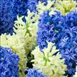 Gençleştiren çiçek özleri! - 9