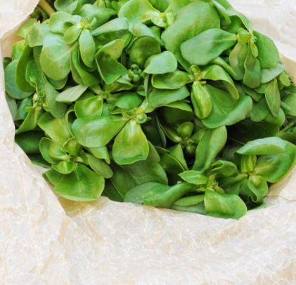 Semizotu:    Yeşil yapraklı herhangi bir sebzeden daha fazla omega-3 içeriyor. içeriğinde ayrıca kalsiyum, magnezyum ve A vitamini bulunuyor.