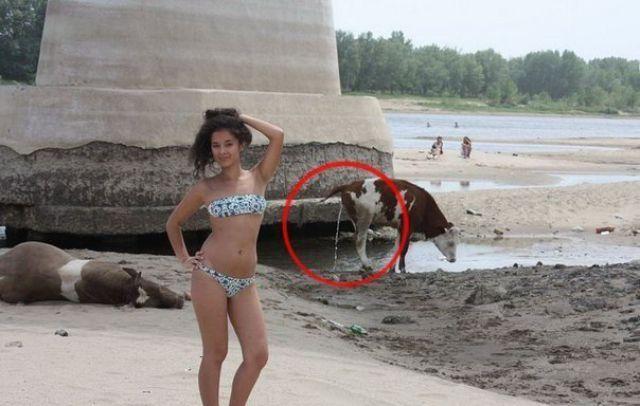 En tuhaf bikini fotoğrafları - 52