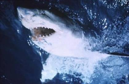 18. Jaws Filmin adı: Jaws Yılı: 1975 Yönetmen: Steven Spielberg