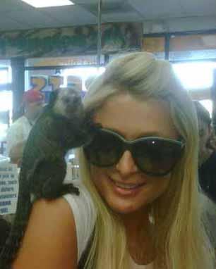 Paris Hilton ve maymunu.