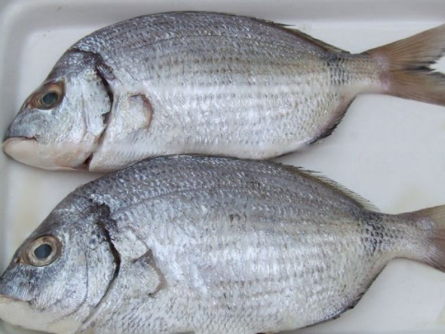 Karagöz: Türkiye'nin tüm denizlerinde bulunur. Ortalama uzunluğu 18-25 cm. kadardır. Eti son derece lezzetli olan karagözün tavası, ızgarası ve buğulaması makbuldür. Kiremitte fırını da yapılır. Ekim ve Kasım en lezzetli olduğu aylardır.