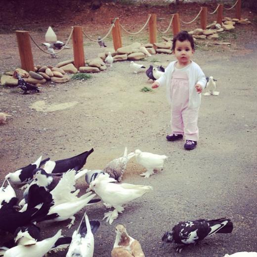 IŞIN KARACA Güvercin aşkına...