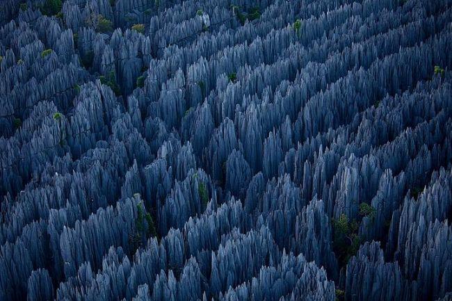 """Taş Ormanı, Madagaskar.  Kalkerden oluşmuş bu tuhaf orman uzun ince """"iğne""""leriyle ne kadar güzel ve korkutucu. Bir bilimkurgu filminden fırlamış gibi."""