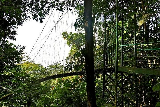 19-Selva Verde Reserve, Sarapiqui, Kosta Rİka