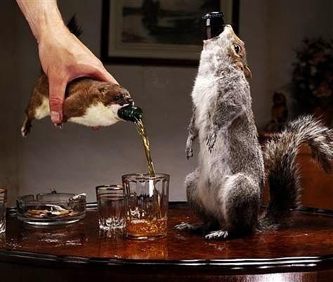Sincap Birası:   Bu dünyanın en pahalı (Şişesi 765 Dolar) ve en sert (%55 alkol oranı) birası. Yollarda ezilerek ölen sincaplar toplanıyor, içleri doldurulup, kürkleri temizleniyor ve şişe koyacağı haline getiriliyor.