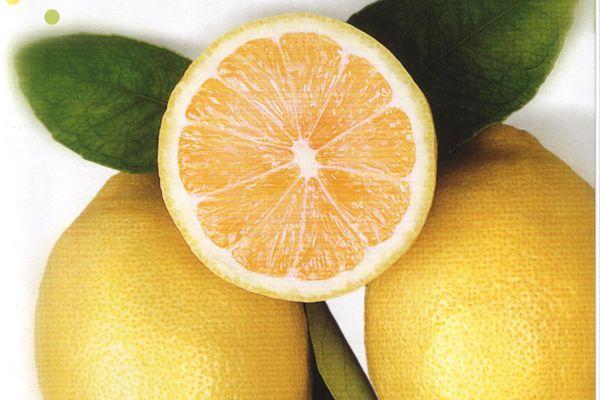20. Acıktığınızı hissettiğinizde, içine limon veya yeşil elma dilimleri eklenmiş büyük bir bardak soğuk su içerseniz, atıştırma isteğiniz belli bir miktarda giderilmiş olur.