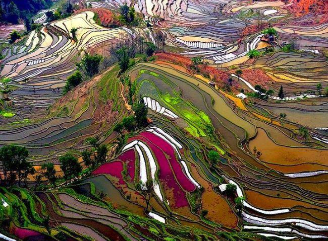 Çin'in Yunnan şehrindeki bu pirinç terasları fotoğrafçıların en gözde noktalarından biri. Aralık - Nisan aylarında inanılmaz manzaralara sahne oluyor.