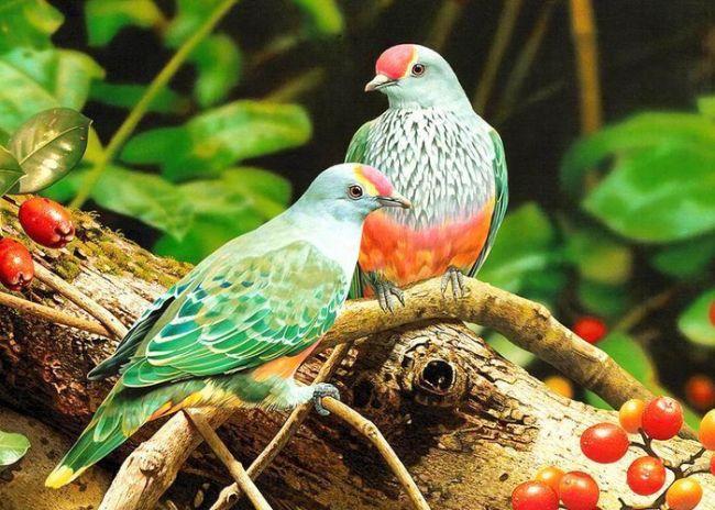 Ailece toplanmış bir yandan çaylarımızı yudumluyor bir yandan televizyondaki belgeseli izliyoruz. Annem; 'Ay ben şu hayvanlardan en çok kuşları seviyorum.' diyor. Babam yorumunda gecikmiyor tabi ki; 'Hiç şaşırmadım; onlar da çok ötüyor zaten!