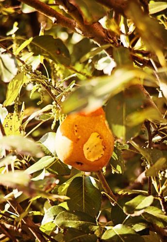 Ahlat: İshali keser, kalbi kuvvetlendirir, idrar söktürücüdür, yaprak ve çiçeklerinden hazırlanan çay, iç kanamaya iyi gelir.