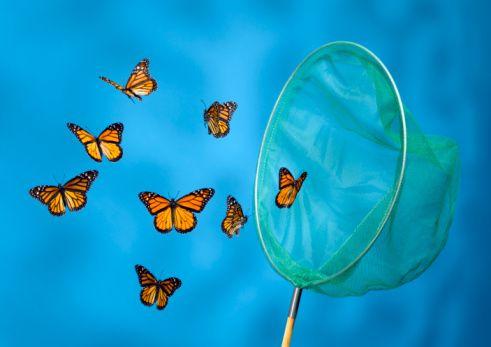 California'da kelebekleri rahatsız etmek yasaktır.