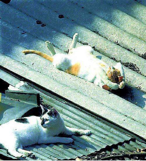 Nasıl uyuyacağını şaşırmış kediler! - 4