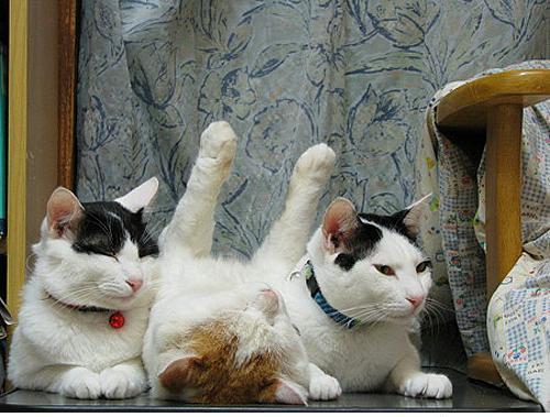 Nasıl uyuyacağını şaşırmış kediler! - 19